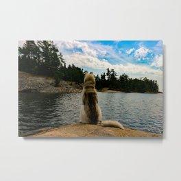 husky dog overlooking lake Metal Print
