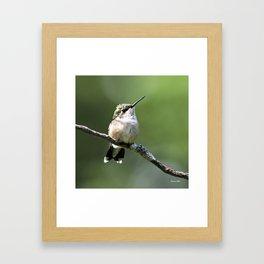 Hummingbird Perch Framed Art Print