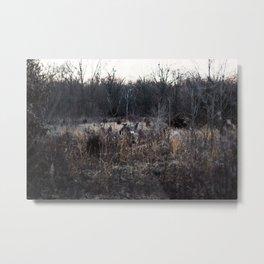 3 Deer Metal Print