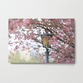 Paris Cherry Blossoms in Spring Metal Print