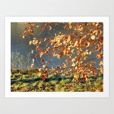 Late autumn leaves Art Print