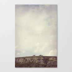 wild horses Canvas Print