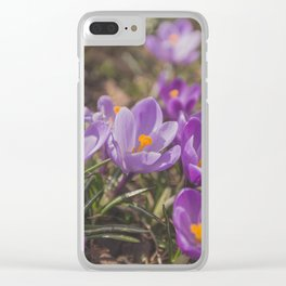 Flowers Crocuses Violet Close-up Spring Sunny Day Clear iPhone Case