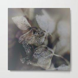 Hydrangea 1 Metal Print