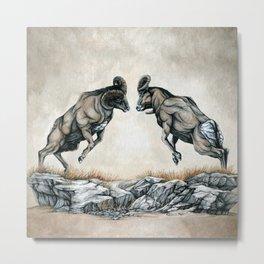 Fighting Bighorn Sheep Rams Metal Print