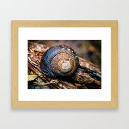 SNAIL ON THE TREE Framed Art Print