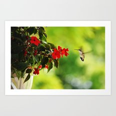Hummingbird at the Flowers Art Print