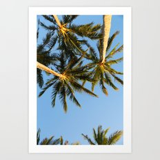 Palm Tree Heaven Art Print
