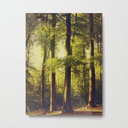 Summer Light Forest Metal Print