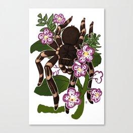 ACANTHOSCURRIA GENICULATA Canvas Print