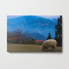 Sheep at the beautiful Qing Jing Farm Metal Print