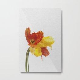 Tulip Still Life Metal Print