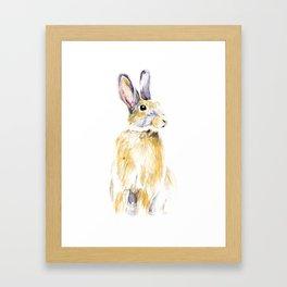 Hare Bunny Framed Art Print
