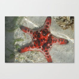 Vanuatu starfish Canvas Print