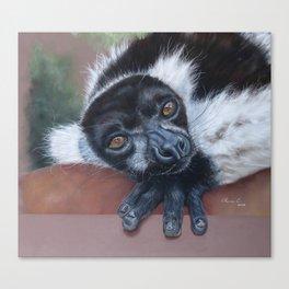Lemur, black and white ruffed lemur Canvas Print