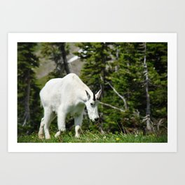 My Friend The Mountain Goat Art Print