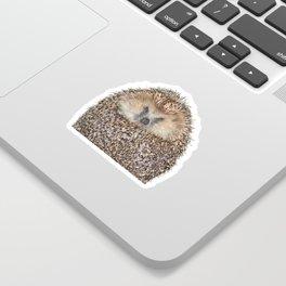 Hedgehog Sticker