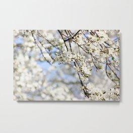 White lilac bloom Metal Print
