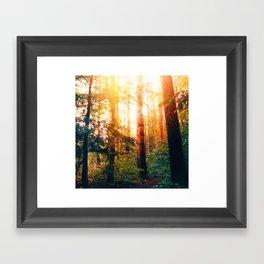Sundown Woods Framed Art Print