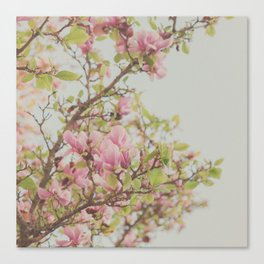 Sweet Pink Magnolia Canvas Print