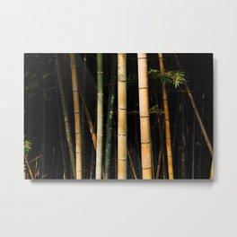 Bamboo Spectrum Metal Print