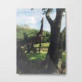 Too High for Giraffes Metal Print