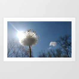 Puffball Sunshine Art Print