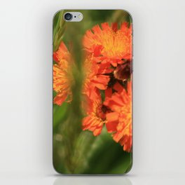Orange Hawkweed Wildflowers iPhone Skin