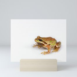 Green and brown frog on white background Mini Art Print