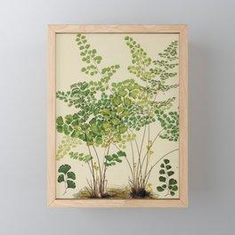 Maidenhair Ferns Framed Mini Art Print