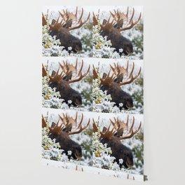 Magnificent Elegant Enormous Elk Horns UHD Wallpaper