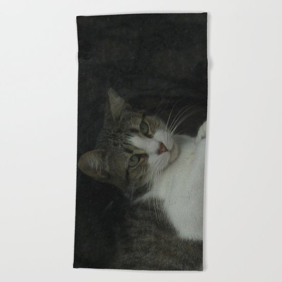 through the looking glass - cat meditating at the window Beach Towel