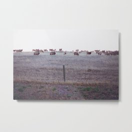 Sheep Valley Metal Print