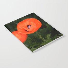 Oriental poppies Notebook