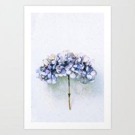Delicate Hydrangea Art Print