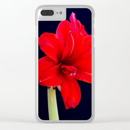 Red Amaryllis Clear iPhone Case