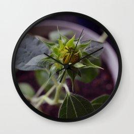 Pot Botany at the Laurels 4: Cringe Wall Clock