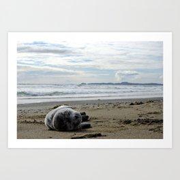 Sealpup Art Print