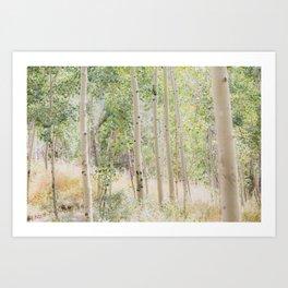 The Aspen Grove Art Print