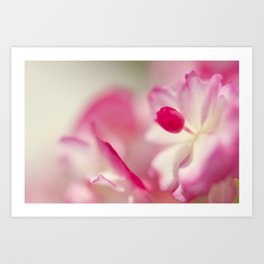 Begonia Gum Drop Art Print