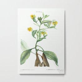 Musschia aurea (Campanula aurea) from Traité des Arbres et Arbustes que l'on cultive en France en pl Metal Print