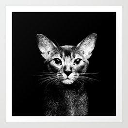 Abyssinian cat portrait black and white Art Print