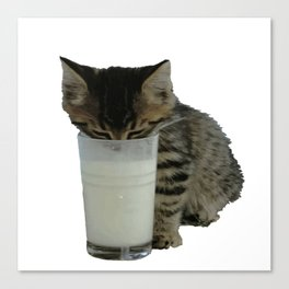 Cute Wild Kitten With A Glass Full of Optimism Canvas Print