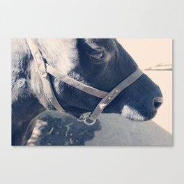 Calf Portrait II Canvas Print