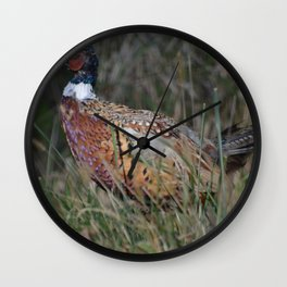 Male Ring Necked Phesant Wall Clock