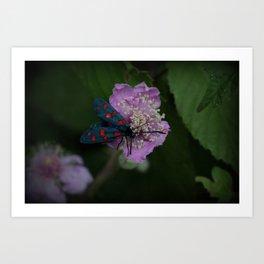 New forest burnet on purple flower Art Print