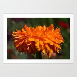 Aroma orange flower Art Print