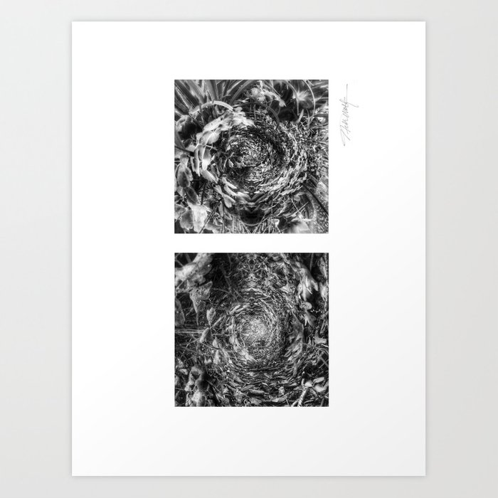 Nature's Twisted Path Black and White Art Print