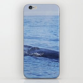 Tropical whale: The Bryde´s whale iPhone Skin