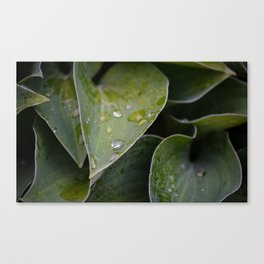 Leaves After Rain Canvas Print